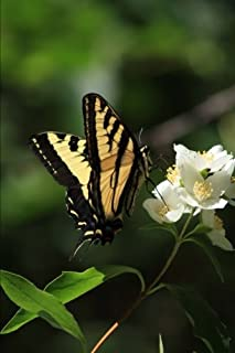 Best black and yellow swallowtail Reviews