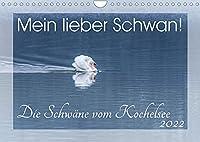Mein lieber Schwan! Die Schwaene vom Kochelsee. (Wandkalender 2022 DIN A4 quer): Grazioese Hoeckerschwaene vor einer Gebirgskulisse; zwoelf aussergewoehnliche, qualitativ hochwertige Fotografien. (Monatskalender, 14 Seiten )