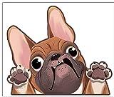 Biomar Labs® 1 x Vinilo Autoadhesivo French Bulldog Frances Perro Dog Pegatina para Coche Etiqueta Sticker Moto Ventana Puerta Casco Scooter Bici Motocicleta Tuning B 225