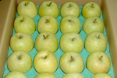 青森産 王林 CA貯蔵りんご 5kg 中玉18〜20個入り