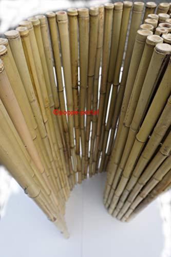 poppe-portal Bambuszaun Rollzaun Bambusmatte Gartenzaun Heckenzaun Lattenzaun (Bambusrollmatte, 18/20mm 180cm H x 180cm B)
