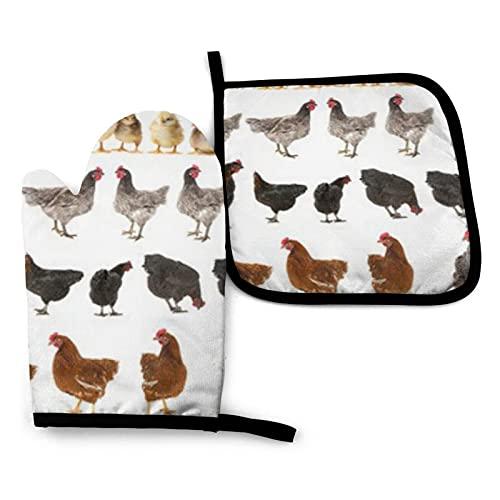 Pollo de gallina aislado en guantes de horno blancos y juego de manoplas para horno y manoplas con guantes de cocina antideslizantes de poliéster reciclable para cocinar y asar
