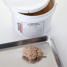 470000-816 - Pail of 10 - Extracted General Dissection Sheep Brains - Pack of 10