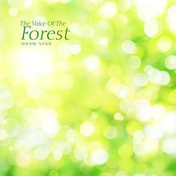 숲의 목소리
