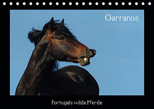 Garranos (Tischkalender 2020 DIN A5 quer)