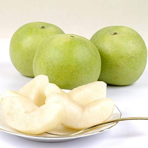 梨 長野産 二十世紀梨(にじゅっせいき)5kg ご家庭用 国華園