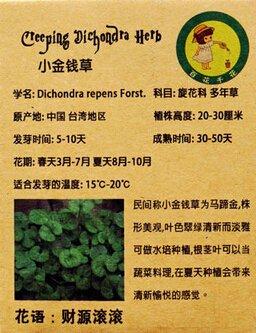 1 pack d'origine 50 graines herbe argent, Bureaux Perennial Bureau décoratif Plantes à feuillage semences