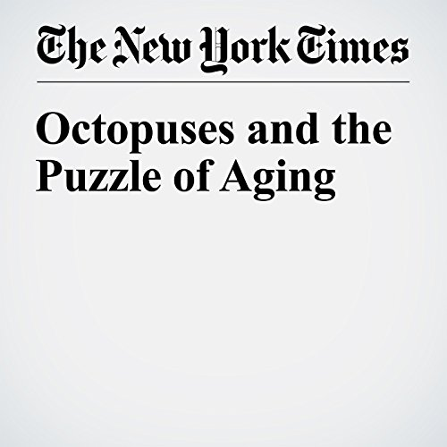 Octopuses and the Puzzle of Aging                   By:                                                                                                                                 Peter Godfrey Smith                               Narrated by:                                                                                                                                 Fleet Cooper                      Length: 9 mins     Not rated yet     Overall 0.0