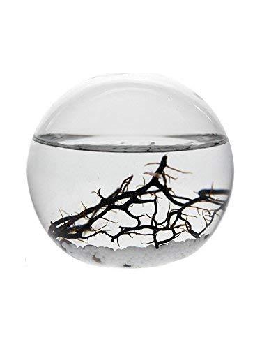 EcoSphere Kleine Kugel-10cm White Line Dekoratives Ökosystem, Glas/weiß, 10 x 10 x 9 cm