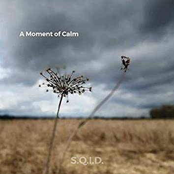 A Moment Of Calm