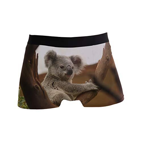 Koala Herren Boxershorts Wildlife Bear Animals für Jungen und Jugendliche, Polyester/Spandex Komfort Gr. S, Mehrfarbig