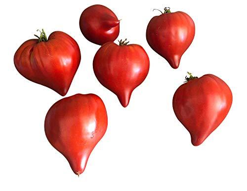 Tomato-Teton de Venus (Venus Breast Large) - 10 graines