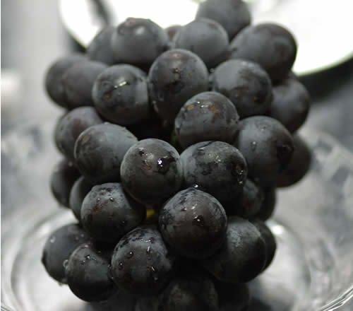 岡山県産種なしピオーネ大粒2房入約1.4kg贈答用秀品