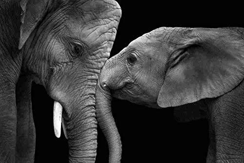 mmhhxx Puzzle de Elefante para Adultos Puzzle de 1000 Piezas Puzzle de Elefante para Adultos 75x50cm -999