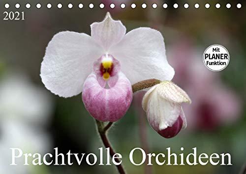 Prachtvolle Orchideen (Tischkalender 2021 DIN A5 quer)