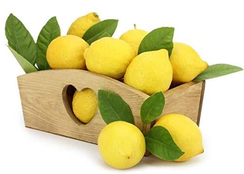 Bloom Green Co. 50 graines naines Lemon Tree - extérieur plantes, bricolage jardin Bonsai, odorants: mélanger