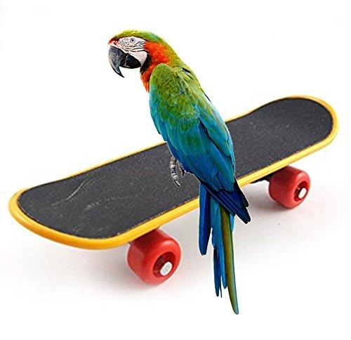 Toruiwa Papageien Spielzeuge Vogel Skateboard Papageien Intellegenz Spielzeuge für Papageien Vogel zufällige Hinterbild (B)