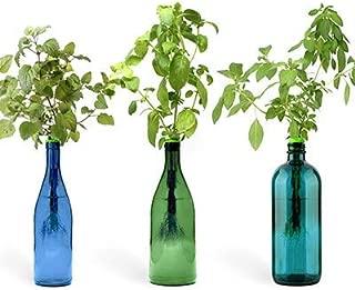 water bottle herb garden