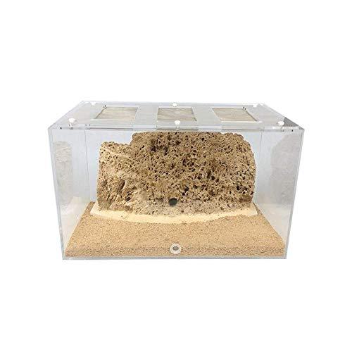 ZKZK Ant Farm Tribe ökologischer Ant Nest, handgemachte Ökologische Wasserabsorbierende Stein, Educational & Learning Großes Geschenk for (Size : B 7.5x4.9x5.1 in)
