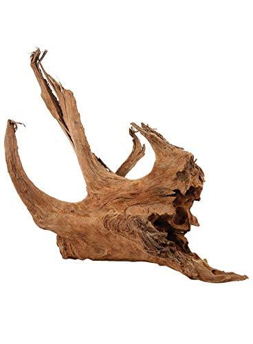 Zolux – Wurzel Mangrove – 15 bis 25 cm