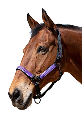 Kensington Premium Halter with Padded Nose — Stronger Than Leather — Padded Nose Piece Adds Comfort and Control — Throat Snap for Identical Fit