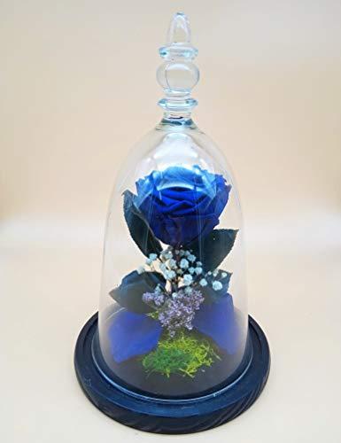 Rosa eterna Azul. Cúpula con Rosa eterna Azul. Altura 30 cm. Rosa eterna preservada Azul. Hecho en España.