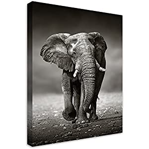 """Sdmikeflax Black and White Elephant Canvas Wall Art for Bathrooms Living Room Animal Pictures Print Artwork, 1 Panel Modern Vertical Frame Wild Life Office Home Decor Ready to Hang 12"""" x 16"""""""