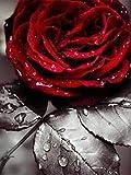 Cuadro de diamantes 5d redondo completo 'rosa en blanco y negro' imagen de diamantes de imitación DIY bordado de diamantes decoración del hogar A3 50x60cm