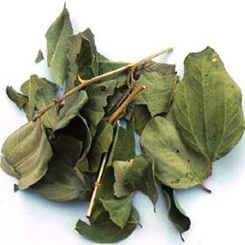 Sidre Feuilles : Feuille de jujubier Sidr Naturelles. Vendues dans un pot refermable pour protéger les feuilles entières ( Rokia Chariaa)