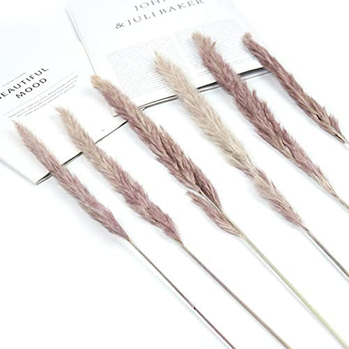 AriesDCHAT Natural Dried Flowers Rabbit Bouque Charlotte Mall Tail Grass Pampas 70% OFF Outlet
