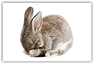 Bashful Bunny Poster (11x17) Baby Nursery Wall Decor Prints (Unframed)