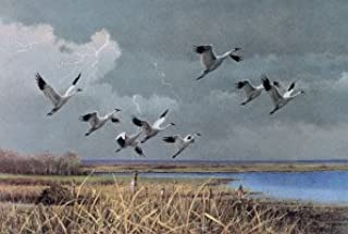 Owen Gromme - Approaching Storm - Whooping Cranes