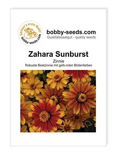 Zahara Sunburst Zinnie von Bobby-Seeds Portion