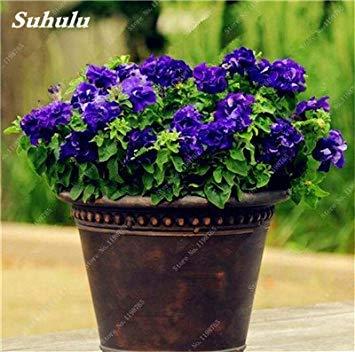 VISTARIC Vert: 100pcs Petunia Seeds Four Seasons peut être planté 25 sortes de couleurs Pétunia Graines de fleurs Bonsai pour le bricolage jardin Plantation verte
