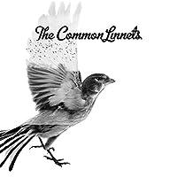 Common Linnets -Spec-
