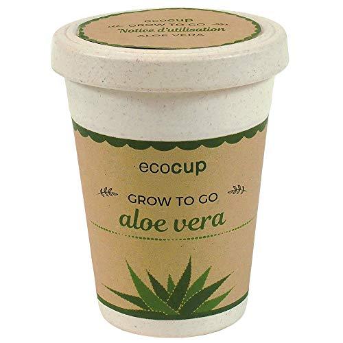 Feel Green Ecocup, Aloe Vera Exotics, Idée Cadeau (100% Ecologique), Grow-Your-Own/Kit Prêt-à-Pousser, Plantes Dans Coffee Cup 10 x 8 cm, Produit En Autriche