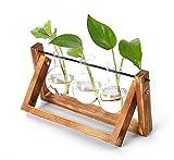 KnikGlass Lot de 3 vases en forme de bulbe avec support en bois vintage pour plantes hydroponiques, décoration pour la maison, intérieur et extérieur, élégant et simple, 3 vase