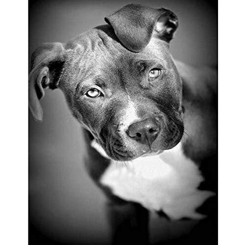 Diefds 5d Diamant malerei voll Bohren schwarz und weiß Pit Bull Hund Diamant Stickerei Tier Pitbull Hunde Strass mosaik Geschenk