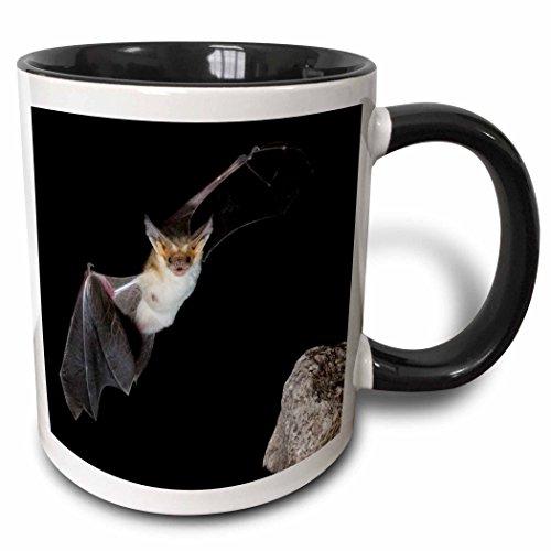 3dRose 87937_10,2 cm Pallid Bat, Arizona-US03 JMC0012-Joe und Mary Ann McDonald Tasse, zweifarbig, 325 ml, Schwarz/Weiß