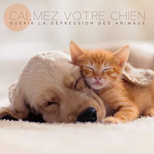 Calmez votre chien. Guérir la dépression des animaux. Animaux sophrologie. Calmez votre chat. Santé et aptitude pour les animaux. Musique de sommeil pour chiots. Animaux heureux