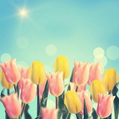 Coloc Photo 150x 220cm Pastel tulipanes rojas y amarillas polvo verde cielo fotografía impresión de fondo para la Photo de Pascua d-4902