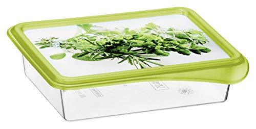 Rotho Rondo 4er-Set Gefrierdosen 0,2l mit Deckel, Kunststoff (PP) BPA-frei, transparent/grün, 4 x 0,2l (12,5 x 10,0 x 6,5 cm)