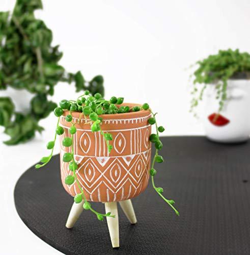 Isenzo Lebende Topfpflanze Senecio Rowleyanus Perlenschnur Miniatur Hängend Perlenkette Zimmerpflanze Sämling Geschenkidee