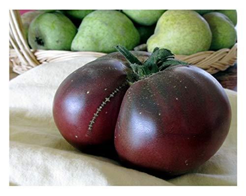 Semi Premier Diretto Org 214 Pomodoro Brandywine Semi Neri organici (Pacchetto di 60)
