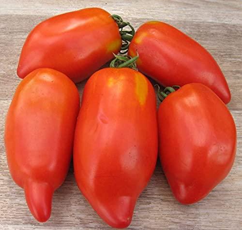 200 piezas de semillas de tomate semillas de hortalizas de jardín familiar variedad sin OMG una de las verduras esenciales para la familia