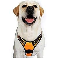 Rabbitgoo No-Pull Pet Harness with 2 Leash Clips