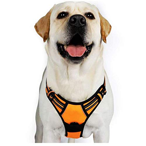 rabbitgoo Dog Harness, No-Pull Pet Harness with 2 Leash Clips, Adjustable Soft Padded Dog Vest, Reflective No-Choke Pet Oxford Vest with Easy Control Handle for Large Dogs, Orange, XL