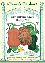 honeynut butternut squash