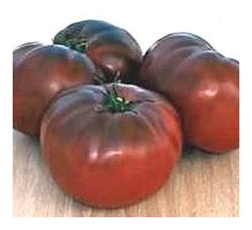 Tomate Brandywine Black Organic - Heirloom tomate rouge foncé - 50 graines