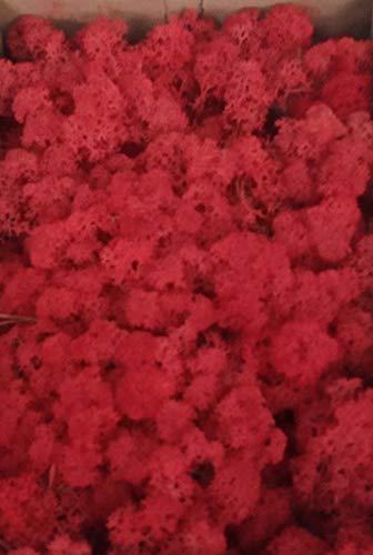 Eternaflor Muschio Finlandia. Muschio di Renna preservato. Muschio liofilizzato. Confezione da 500 Grammi. Colore: Ross